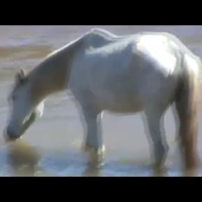 O Redemunho (Trailer Oficial)